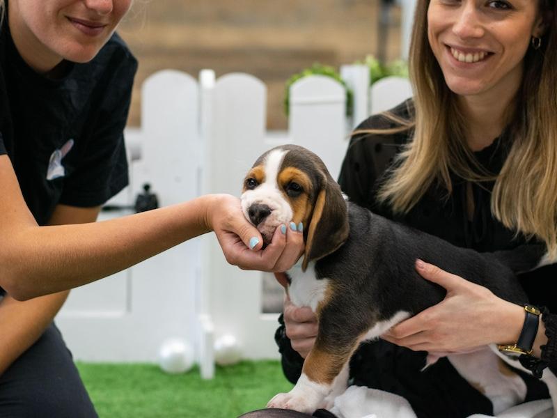 How do you become a council registered dog breeder?