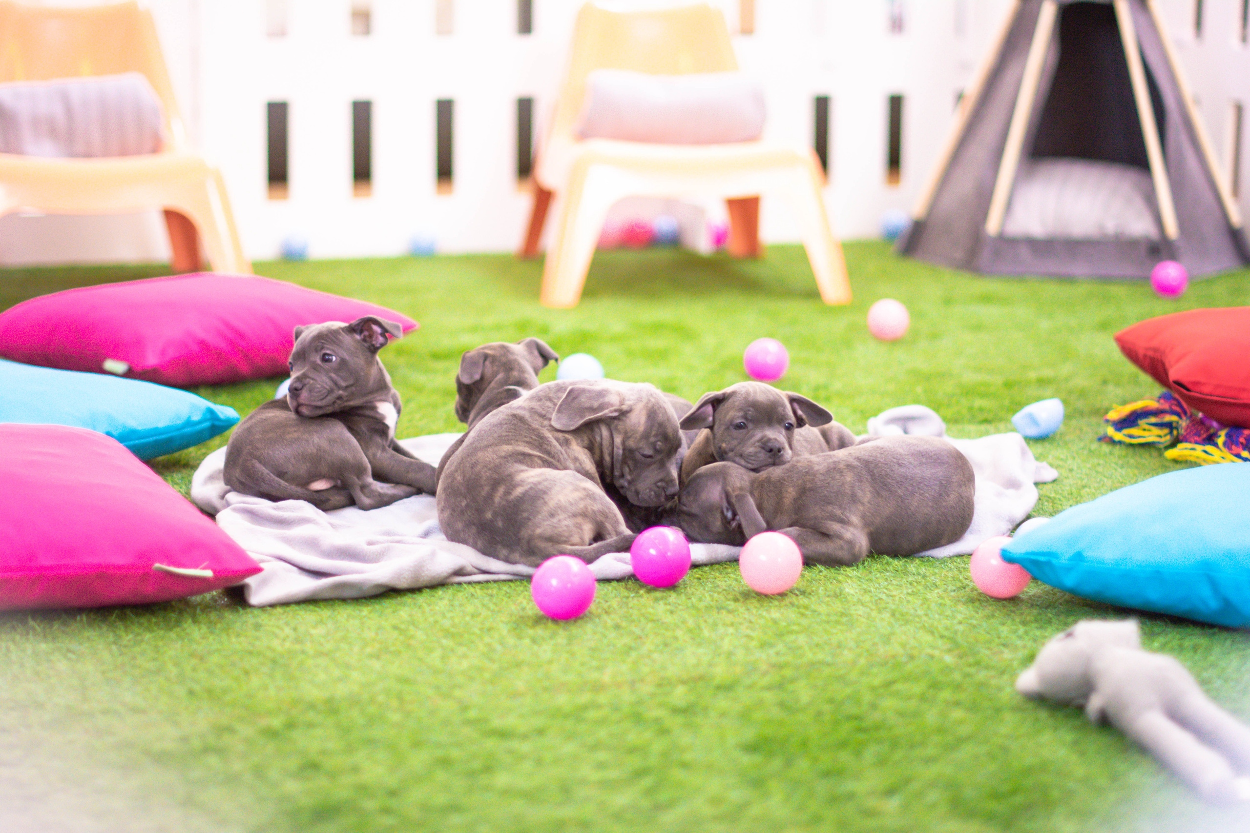 tips for caring for your first litter of puppies