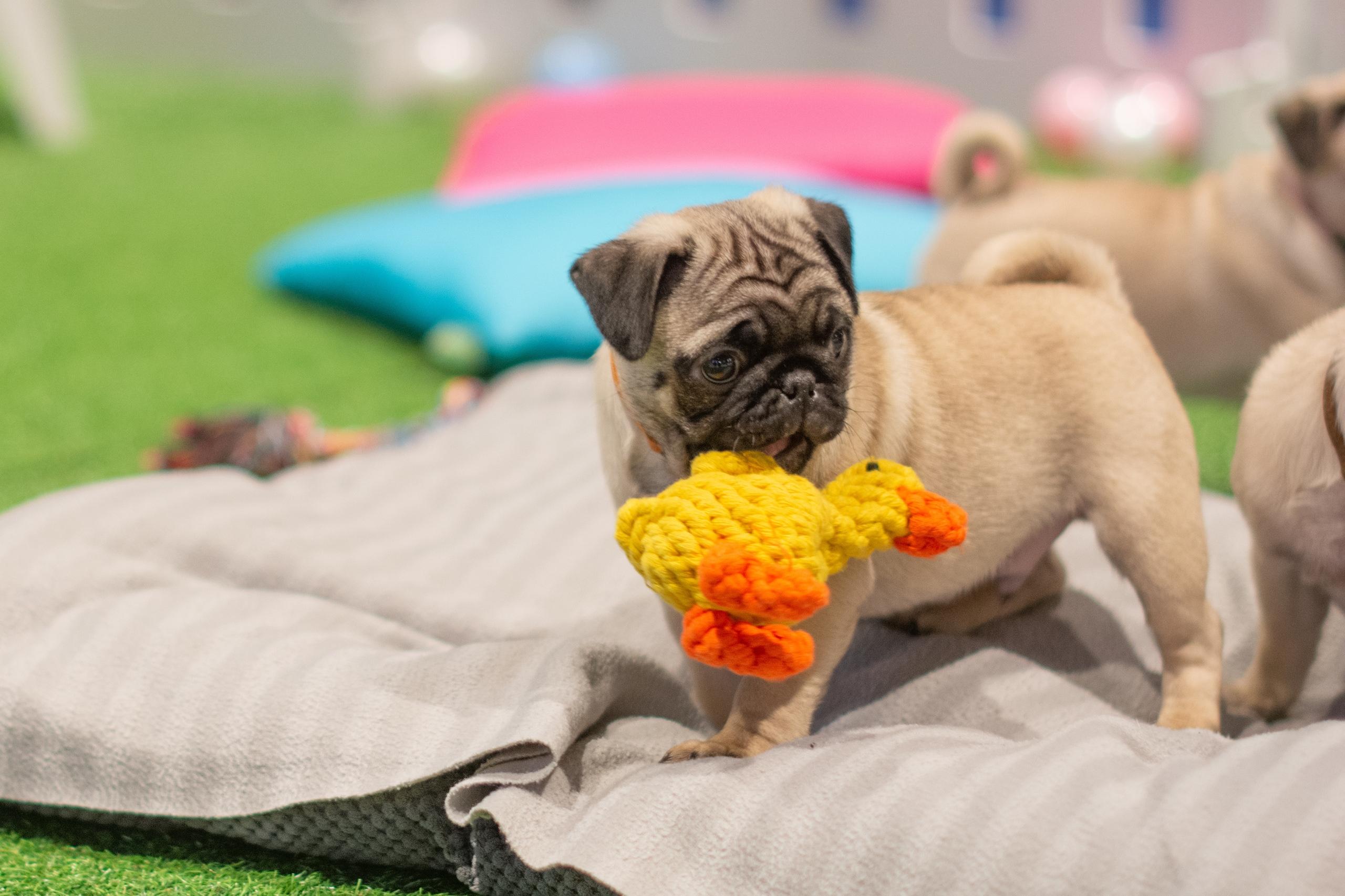 Should I buy a puppy?