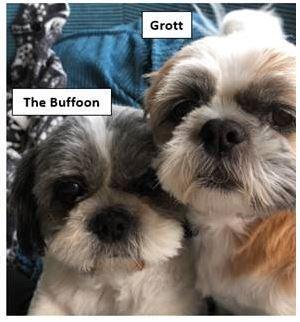 Grott The Buffoon
