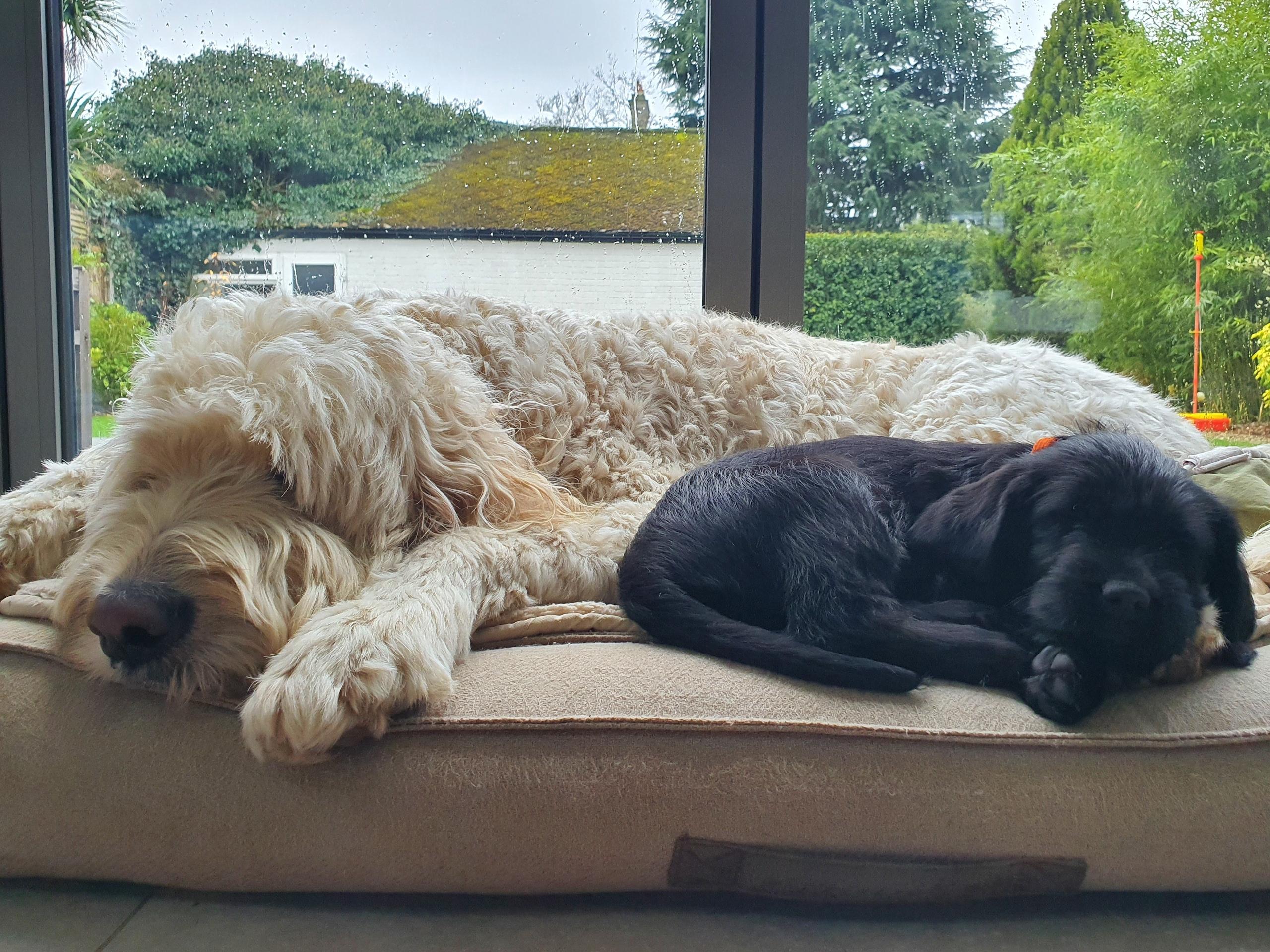Hugo 9 weeks and Bailey