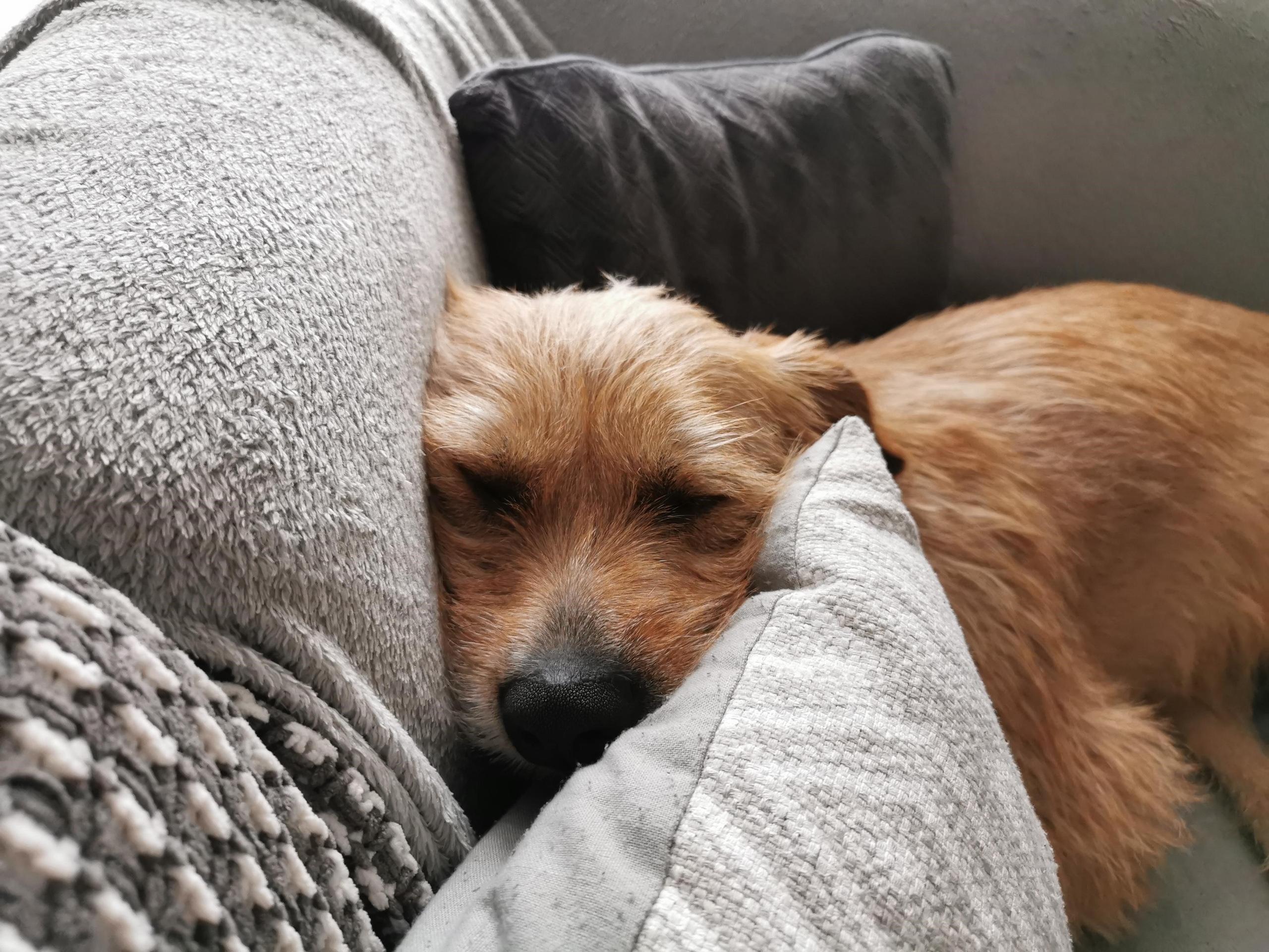 Cai on sofa 1