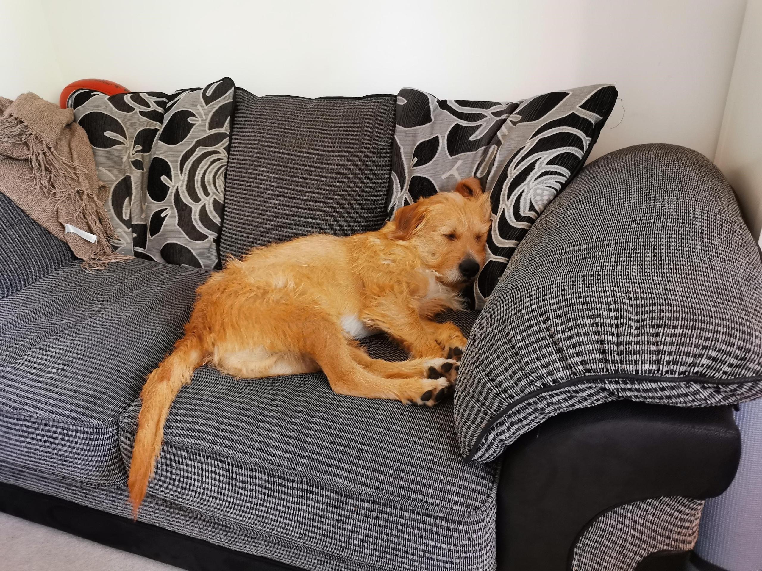 Cai on sofa
