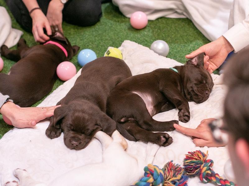 Do I need to help my dog give birth 202001 PIW Fidelity 4289