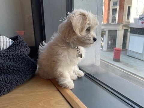 Frankie watching