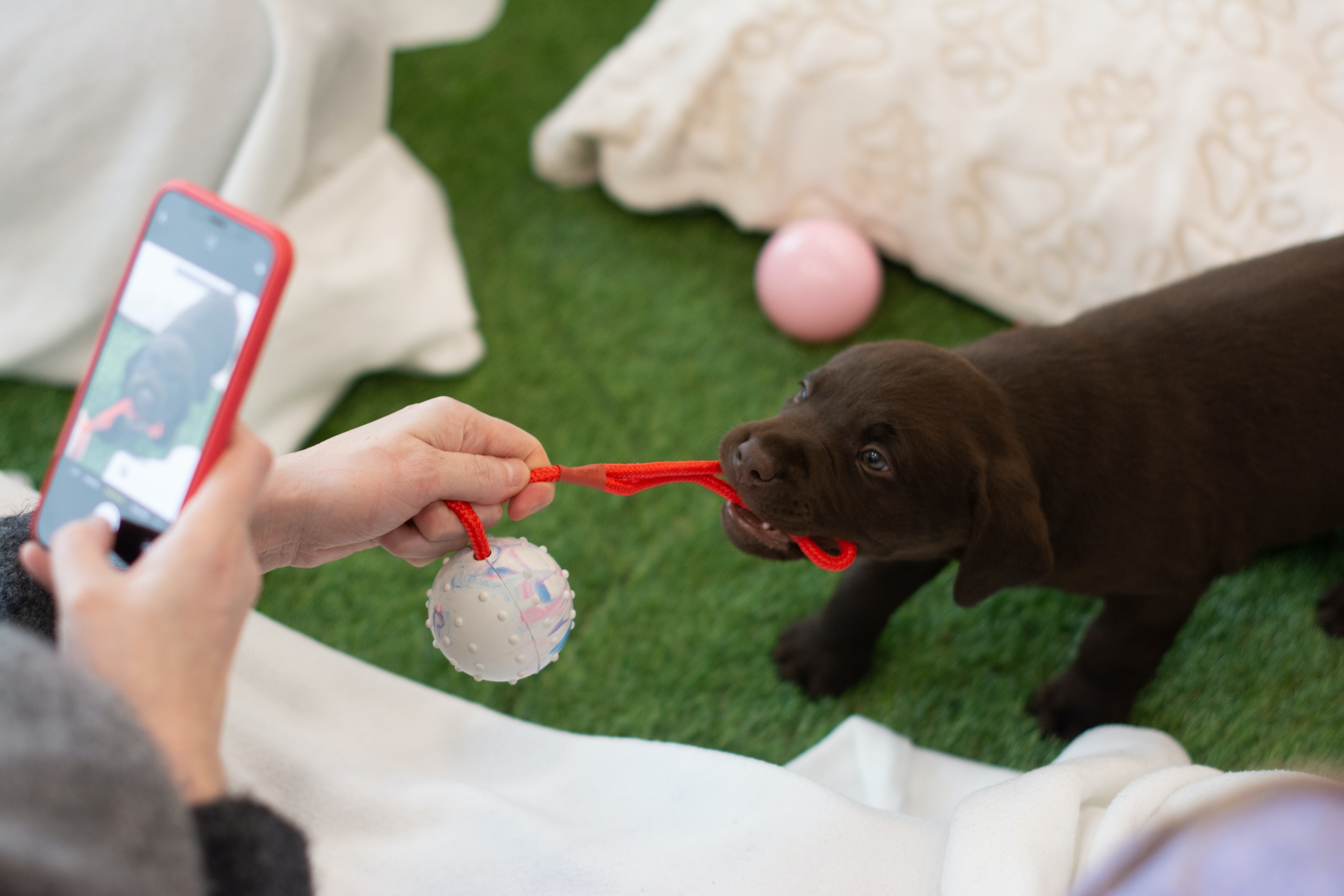 The best puppy toys for teething 2021 DSC 3522