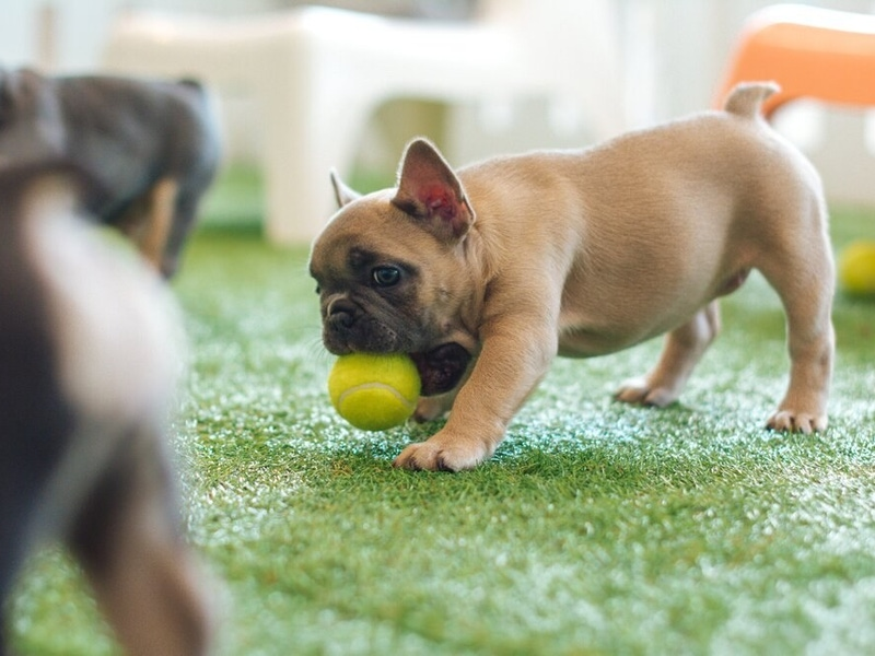 Pup with ball