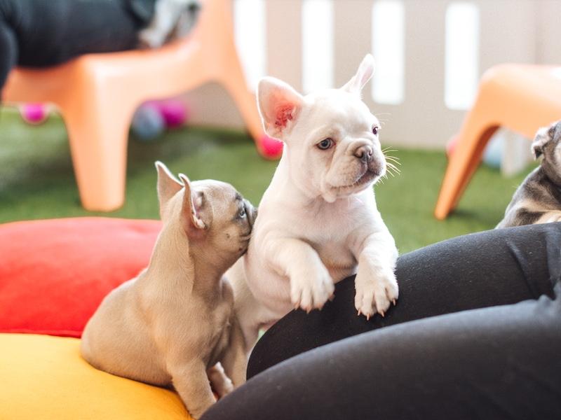 puppies saying hi