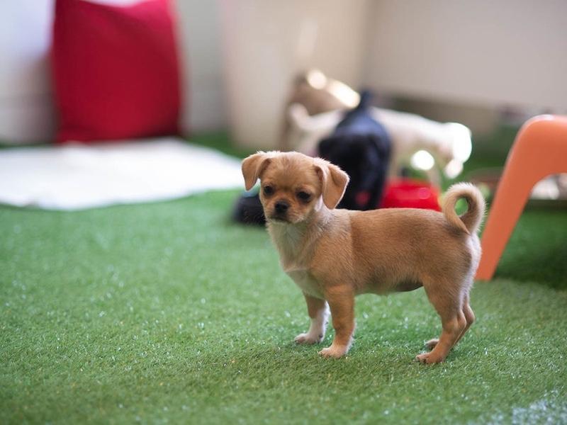 Attentive puppy