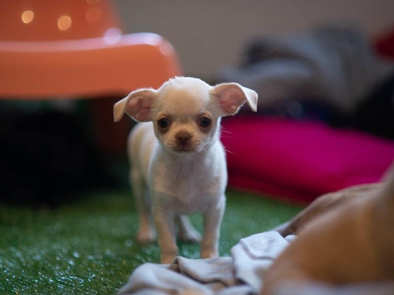 pup stood up